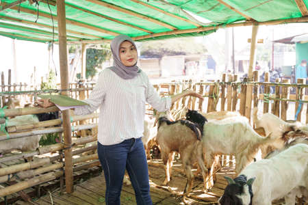 muslim veterinarian medical check up the goat