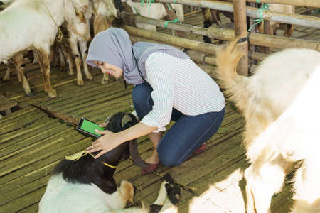 muslim veterinarian medical check up the goat Reklamní fotografie