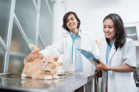 brown cat sitting at a table is observed by a female doctor carrying a clipboard against the background of a male veterinarian