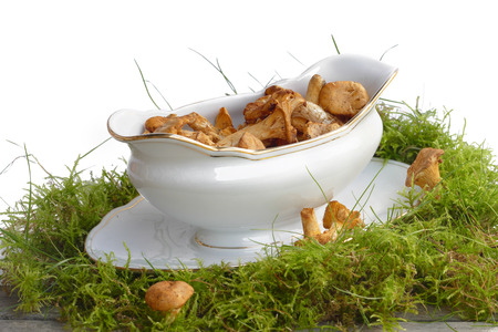 Sauce boat with chanterelles standing on moss for mushroom ragout, white background