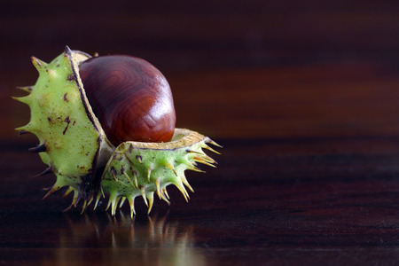 buckeye tree: single chestnut with broken shells on a dark brown table of wood