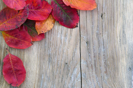autumn background, old wooden board with red colored leaves in the corner, copy space photo