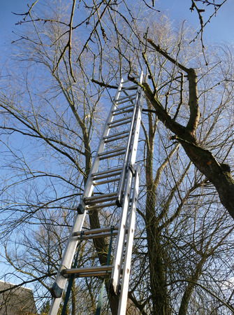tree trimming: ladder of aluminum at a bare tree for tree trimming blue sky,  gardening in fall or early spring