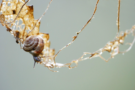 gastropod: snail adventure scene, small gastropod creeps carefully on a risky climbing tour, but it eats the leaf on which it depends, may be metaphor for balancing act in life, copy space in the background Stock Photo