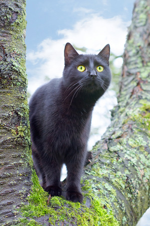 black cat on a tree, blue sky