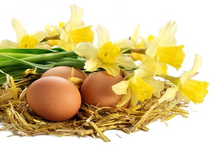 three eggs in a nest of golden straw and daffodils isolated on white background Imagens