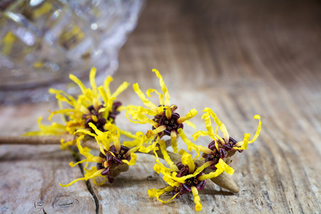witch hasel in bloom on old rustic wood, crystal glass vase blurred in the background, copy space Archivio Fotografico