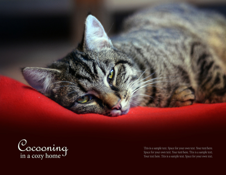 sample text: cat relaxing on a red blanket, copy space, sample text in the red backgrióund cocooning in a cosy home
