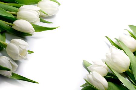 battesimo: tulipani bianchi in due angoli, isolati, questo contesto possono essere separati e ogni angolo possono essere utilizzati separatamente in tutte le direzioni Archivio Fotografico