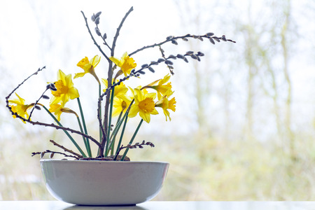 pussy willow: spring decoration, daffodils and pussy willow in a ceramic bowl in front of a window, copy space in the blurry background