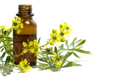 Rue (Ruta graveolens), tak met bloemen en een fles essentiële olie geïsoleerd op een witte achtergrond, oude medische plant Stockfoto