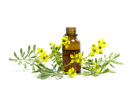 medieval medicine: Rue (Ruta graveolens), branch with flowers and a bottle of essential oil isolated on a white background, medieval medicinal plant