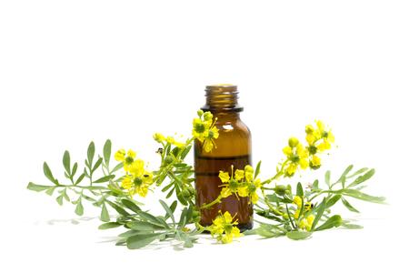 Rue (Ruta graveolens), tak met bloemen en een fles essentiële olie geïsoleerd op een witte achtergrond, middeleeuwse medicinale plant