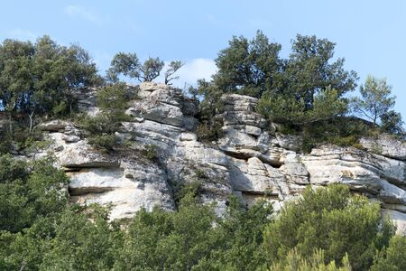 luberon: pine trees and bushes growing on a steep rock face in Southern France, Luberon