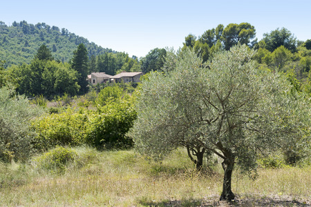 french countryside: Typical rural landscape in Provence with olive tree, country house and clad hills, south of France, Luberon region