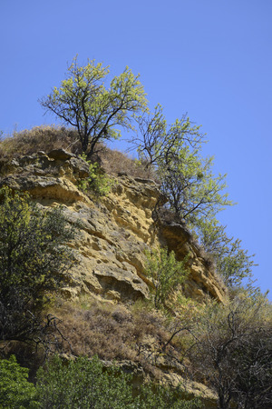 luberon: Rocky landscape with Bushes in Provence, Cadenet, south of  France, Luberon,