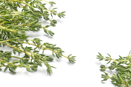fresh green thyme, Thymus vulgaris, in two corners isolated on a white background, copy space Archivio Fotografico