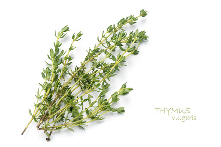 thyme: fresh green thyme, Thymus vulgaris, isolated on a white background with sample text Stock Photo