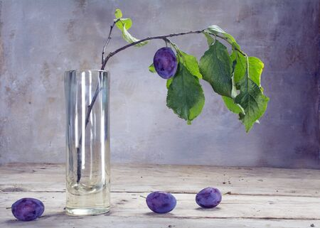 vase plaster: last plum hanging on a branch in a glass vase on a rustic wooden table against a purple gray plaster wall