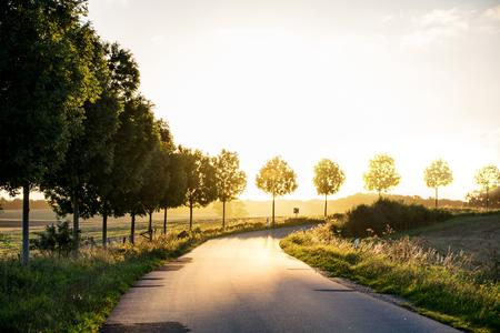schmalen Landstraße mit Fading Bäumen an der Seite, was in einem sanft-Kurve auf den herbstlichen Abendlicht, Konzept der Ruhestand und Lebensabend