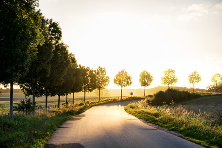 narrow country road with fading trees at the side, leading in a gently curve to the autumnal sunset light, concept of retirement and evening of life