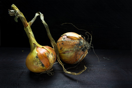 food still: onions from the vegetable garden on dark wood, food still life with copy space