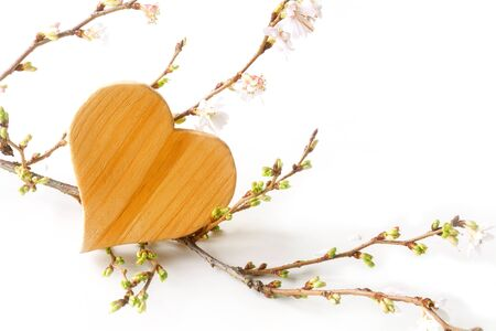 winter cherry: heart shape made of wood with blooming branches from winter cherry on a white background, love symbol for valentines day or mothers day, copy space, selected focus