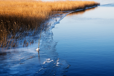 skating on thin ice: First ice at the lake shore, golden dry reeds beside the blue water, copy space Stock Photo