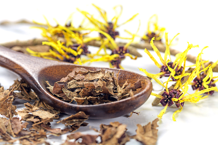 liniment: flowering witch hazel (Hamamelis) and wooden spoon with dried leaves for homemade skin care cosmetics and bath additive on a white background, closeup with selected focus, narrow depth of field Stock Photo