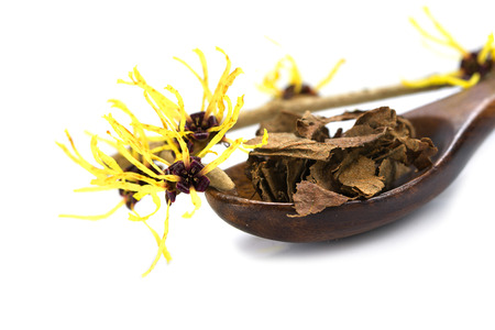 liniment: flowering witch hazel (Hamamelis) and a wooden spoon with dried leaves for herbal essence or tea as homemade cosmetics and bath additive, isolated with shadow on a white background, close up with selected focus, narrow depth of field