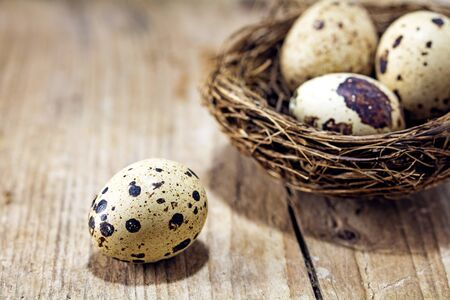 financial assets: dotted quail egg on a rustic wooden board and a nest with three eggs blurred in the background, concept for easter, home and financial assets, close up with selected focus, narrow depth of field