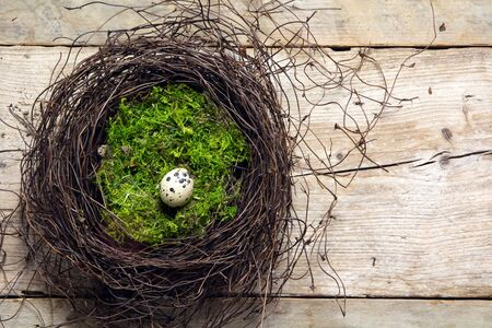 nest egg: easter nest of twigs and green moss with a lonely quail egg on rustic wooden planks, view from above with copy space Stock Photo