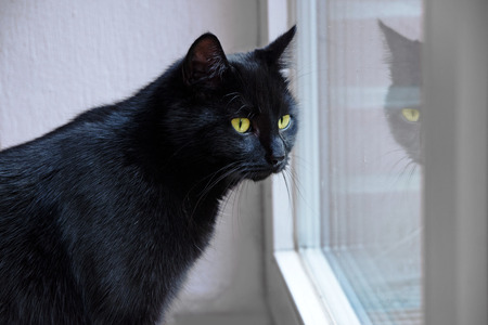 black cat with yellow eyes looking out the window and is mirrored, indoor scene Stock Photo