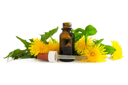 dandelion extract in a small bottle with fresh leaves and flowers isolated with shadows on a white background, medicinal herb selected focus, narrow depth of field