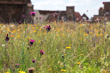 green roof, meadow with wildflowers on a roof in the old town creating a habitat for wildlife, selected focus, narrow depth of field