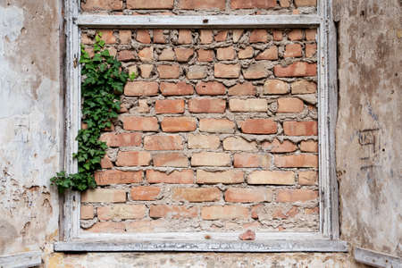 refurbish: bricked up window frames and some ivy in an old building, background with copy space Stock Photo