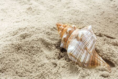 narrow depth of field: large sea shell in the sand at the beach, concept for summer holiday at the seaside, copy space, selected focus, narrow depth of field Stock Photo