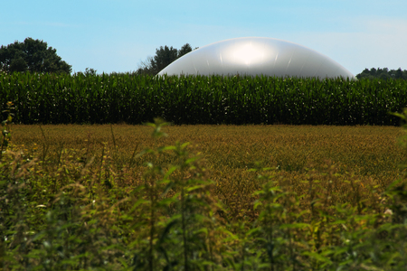 anaerobic: biogasanlage in a corn field against the blue sky, concept for agriculture and renewable energy