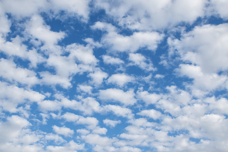 altocumulus: many small fluffy clouds on the blue sky on a sunny summer day, altocumulus or cirrocumulus formation, background texture