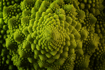 Romanesco broccoli or Roman cauliflower, close up shot from above, texture detail  of the healthy vegetable Brassica oleracea, a variation of cauliflower bred near Rome