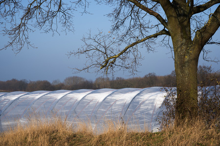 Greenhouse tunnel from polythene plastic under a tree on an agricultural field, blue sky, copy space, Stock Photo