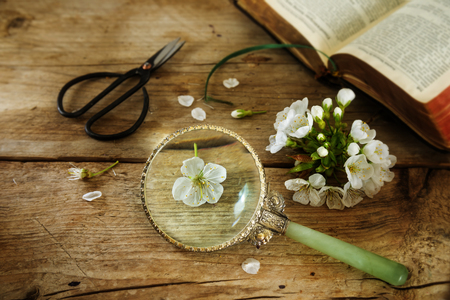 Botany, cherry blossom, scissors, magnifying glass and a book on the determination of plants on a rustic vintage wooden table, science concept with copy space, selected focus, narrow depth of field