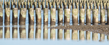 wooden groynes at the sea with reflections on the water surface, coast protection in the Baltic Sea, Germany, panoramic banner format, selected focus