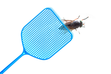 Blue flyswatter is hunting a dark giant horsefly, isolated on a white background, copy space