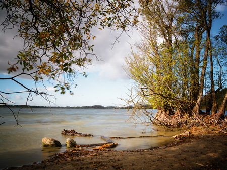 alder trees with bare roots on the lake shore in the warm evening light, smooth water by long time exposure, copy space Stock Photo