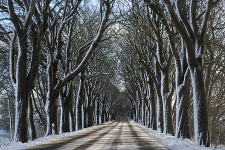 avenue in winter with dark bare trees and white snow, dangerous driving concept, copy space, selected focus