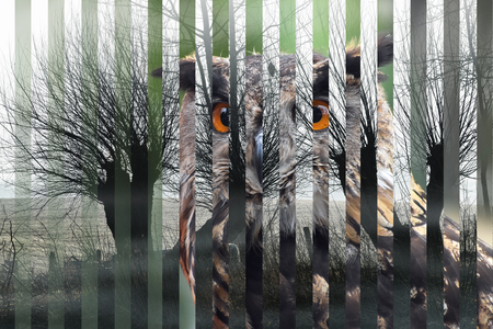 portrait of an Eurasian eagle owl (bubo bubo) and its habitat cut in strips, concept for species extinction and dangerous decline of nature