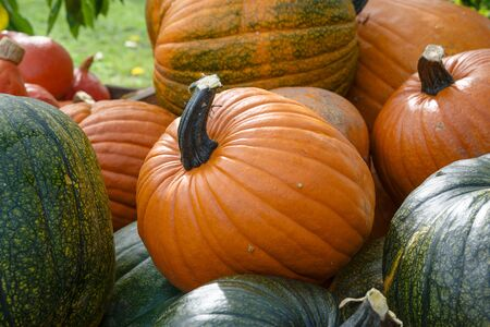 various pumpkins, decorative autumn vegetables for halloween and thanksgiving, selected focus, narrow depth of field 版權商用圖片