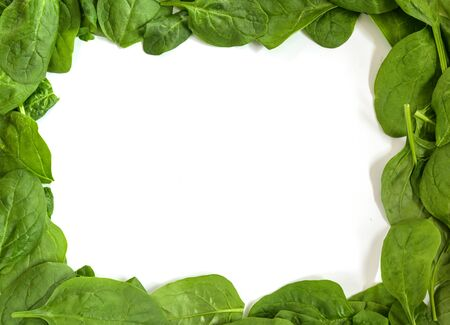 Frame border from fresh spinach leaves isolated on a white background, copy space, high angle top view from above