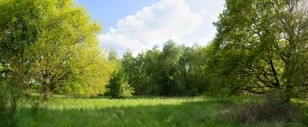 Green meadow on a sunny glade between trees Stock Photo